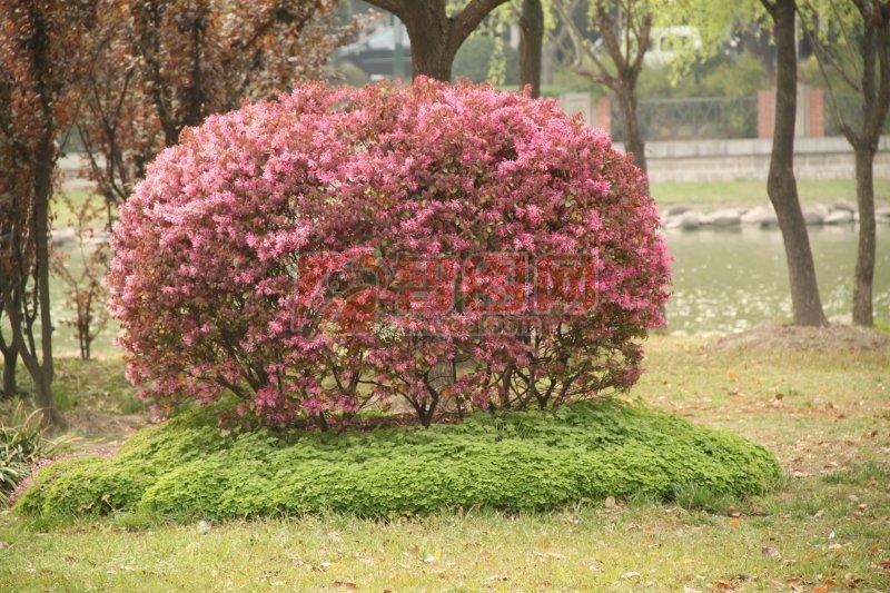 首页 摄影专区 自然景观 自然风景  关键词: 高清花树素材 草地素材