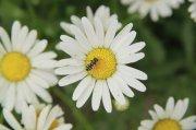 白色鲜花摄影
