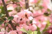 樱花摄影元素03