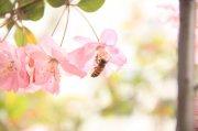 樱花摄影元素01