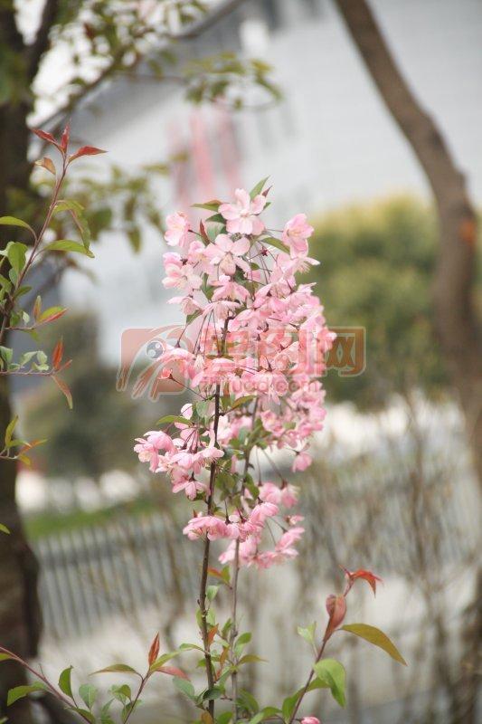 梅花树枝简笔画