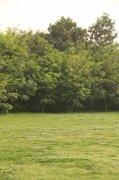 绿色树木摄影