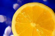 橙子摄影元素03