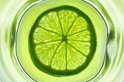 檸檬片攝影