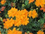 红橙色花儿