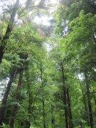亚热带树林