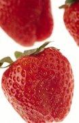 草莓摄影澳门永利赌场网址