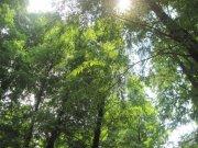 阳光下绿树