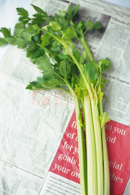 【jpg】芹菜素材