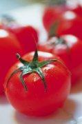 西红柿元素