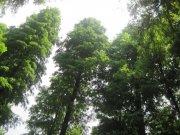 高大绿森林