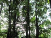 青青松柏园林