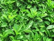 水珠青翠绿叶