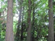 绿色粗壮树干