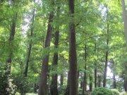 青青绿光森林