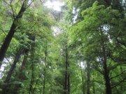亚热带绿树森林