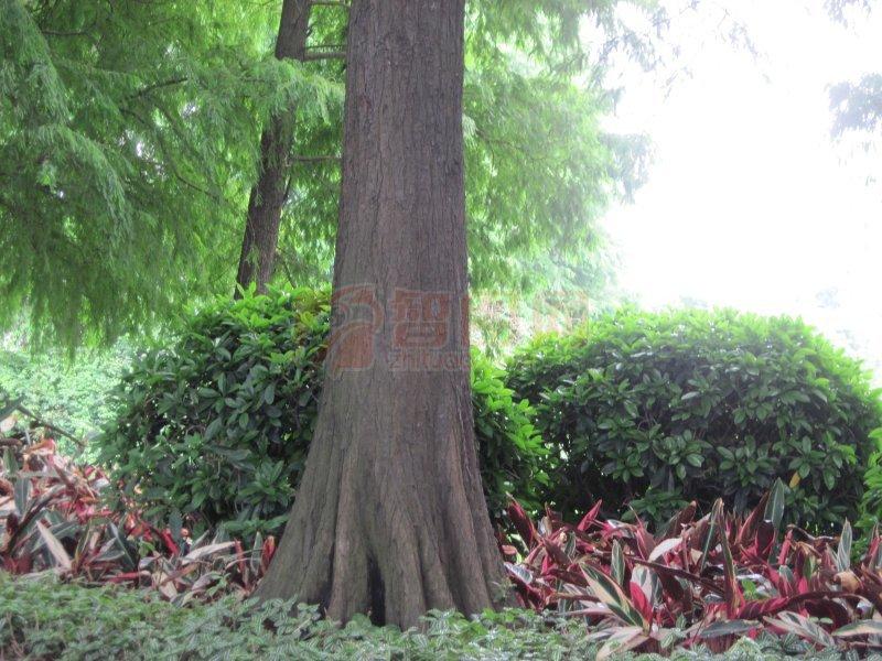 绿树 公园景色 外景摄影 大树 外景拍摄 野草 草野 草本 草丛 草绿