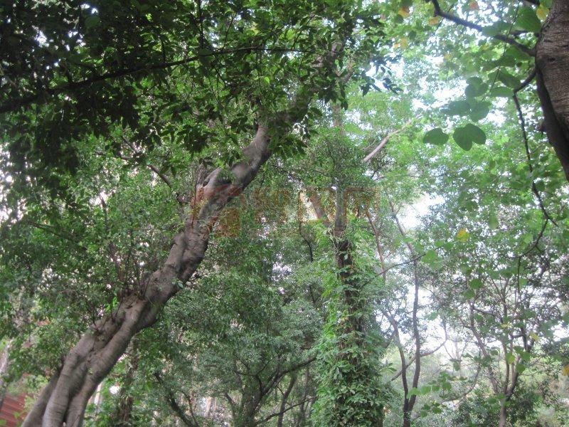 葱葱绿绿 参天大树