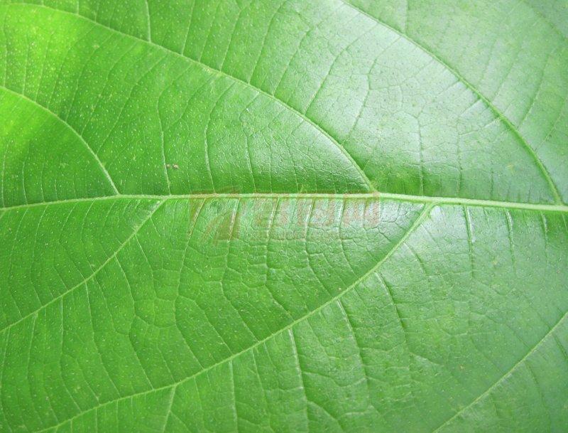 首页 摄影专区 生物世界 树木树叶  关键词: 说明:-清新绿叶子 上一张图片