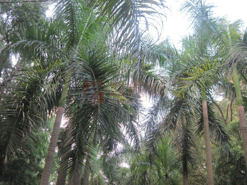 翡翠绿 参天大树 常青树 森林树木 林园 绿林 植物 风景 椰树林 椰子
