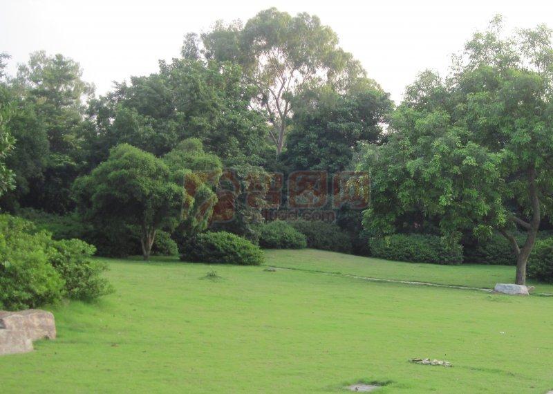 首页 摄影专区 自然景观 自然风景  关键词: 说明:-绿油油草坪树木 上