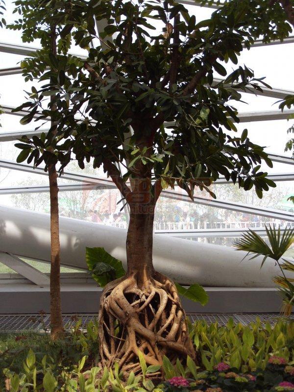 生物世界 树木树叶  关键词: 说明:-树 上一张图片:   木棉花树皮 下