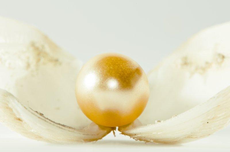 漂亮的珍珠圖片 唯美珍珠 珍珠素材下載 高清珍珠素材
