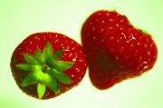 漂亮的草莓齐发国际娱乐app