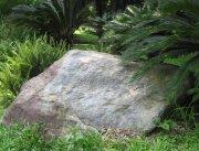 鐵樹大石塊