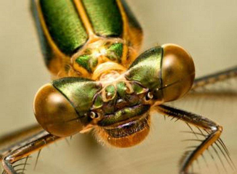 【jpg】可爱的苍蝇图片