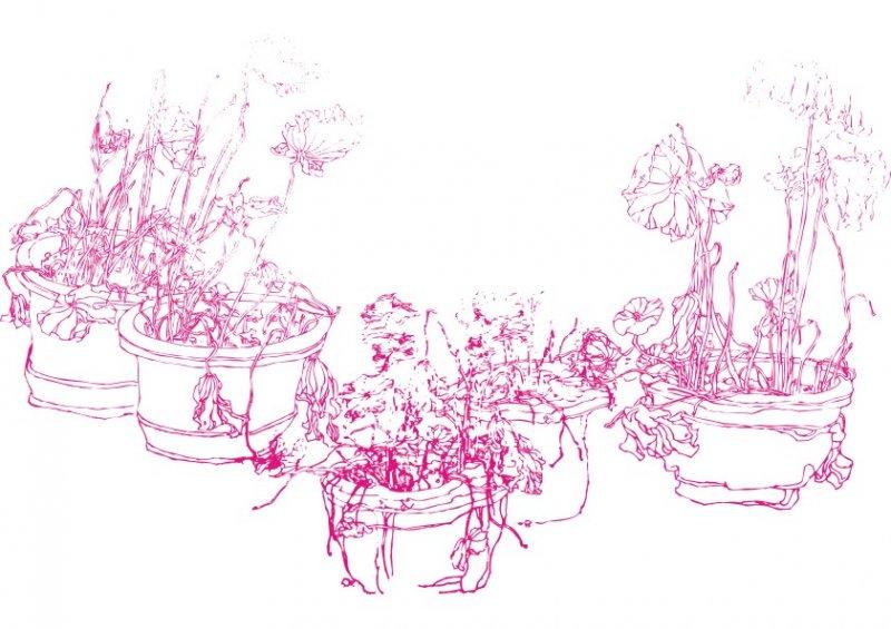 盆栽植物线描写生画图片大全 黑板报 植物 钢笔画 盆栽 其
