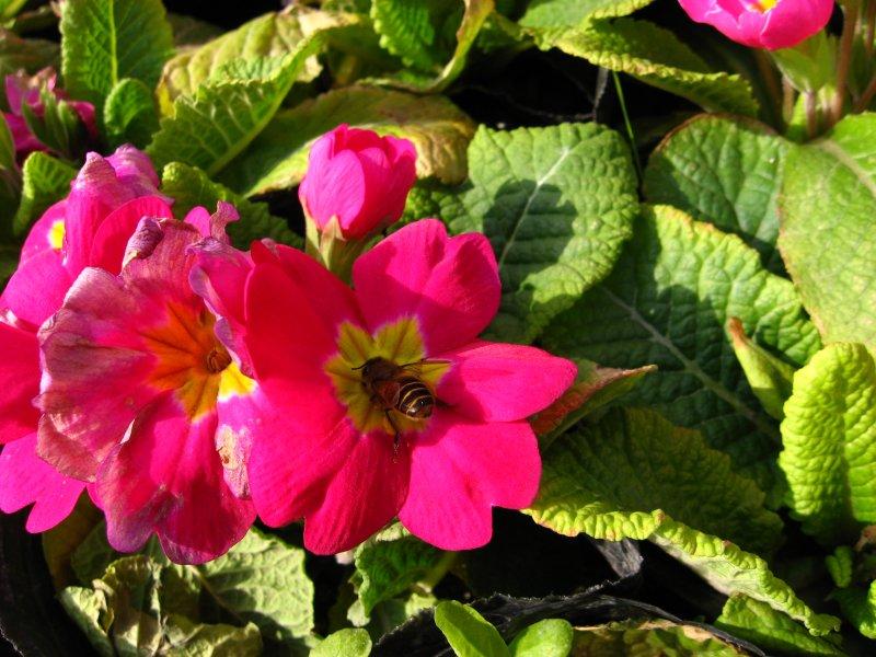 【jpg】红花配绿叶