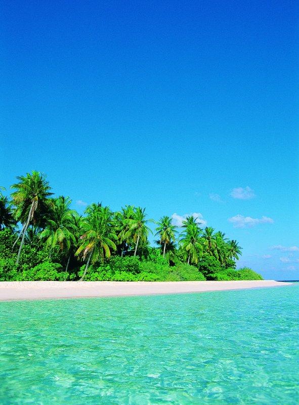 【jpg】海边美丽的椰树风景图片素材下载