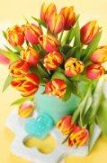 粉红郁金香图片下载 摄影图片下载 创意模板