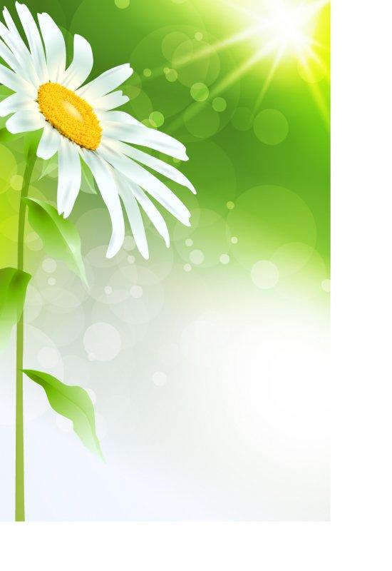 精美白色菊花矢量素材