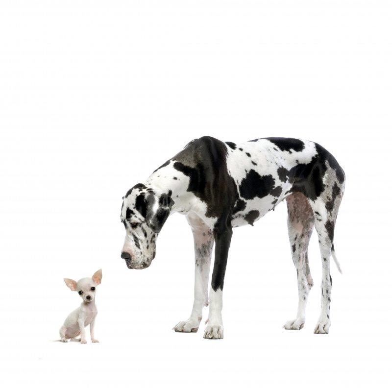 【jpg】可爱宠物狗图片