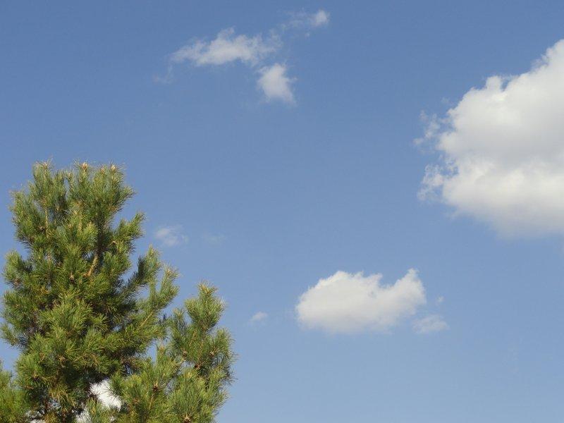 关键词: 说明:-蓝天白云青松 上一张图片:  蓝天白云松树 下一