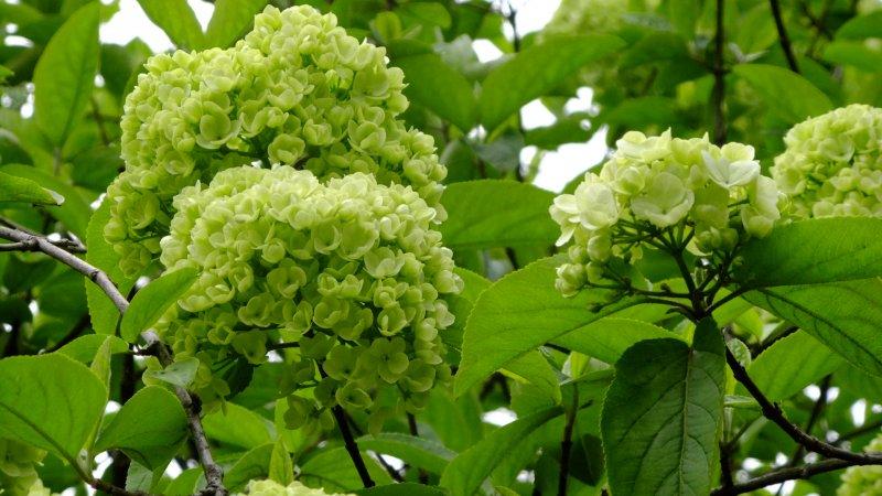 绿色名片 绿色风格 绿色底纹 绿色植物 绿色家园 绿色春天 绿色素材