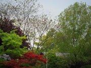 绿博园春天