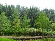綠博園春天之綠色