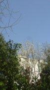 蓝天白墙绿树