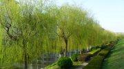 春天小區風景帶