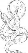 黑色花纹蛇