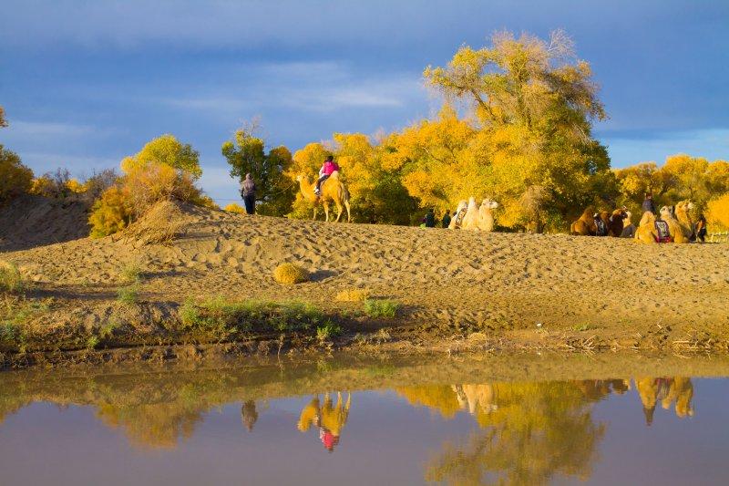 首页 摄影专区 旅游摄影 国内旅游  关键词: 额济纳 胡杨林 沙漠 骆驼