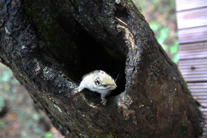 爬树的松鼠的照片