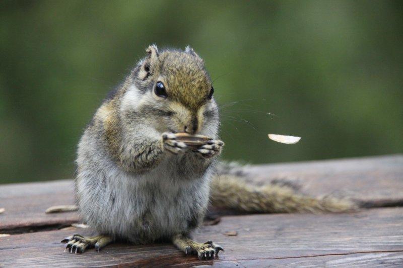首页 摄影专区 生物世界 野生动物  关键词: 说明:-小松鼠吃瓜子 上一