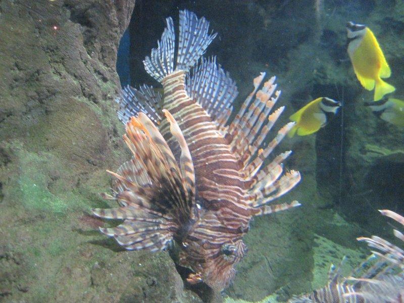 深海动物 海洋动物馆 海洋动物园