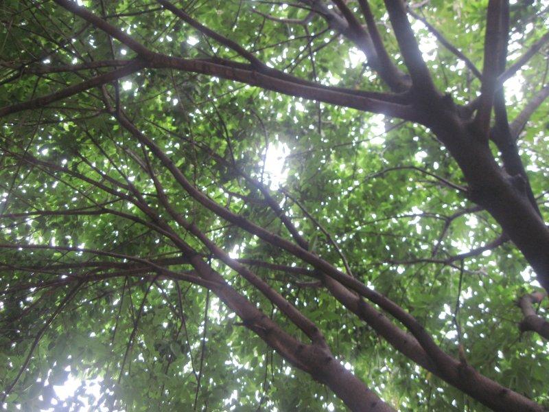 清雅 高雅 绿树林 树木 原始森林 园林 公园 树柏 生态园林 生态森林
