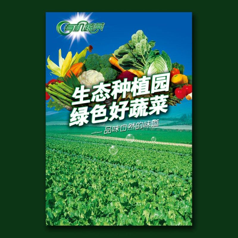 【psd】有機蔬菜海報圖片