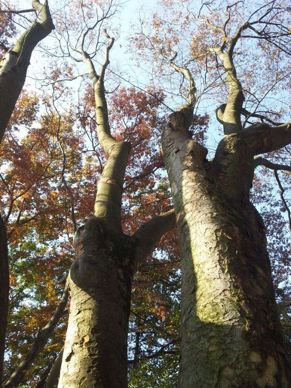 首页 摄影专区 自然景观 自然风景  关键词: 树 秋天的树 路边的大树